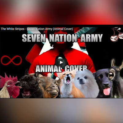 Seven Nation Army - Animal Medley